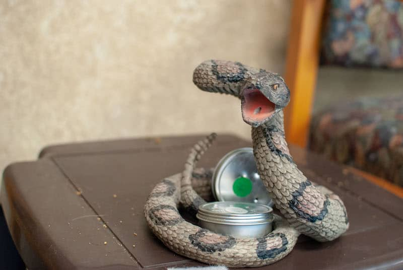 Rattlesnake Training for Dogs