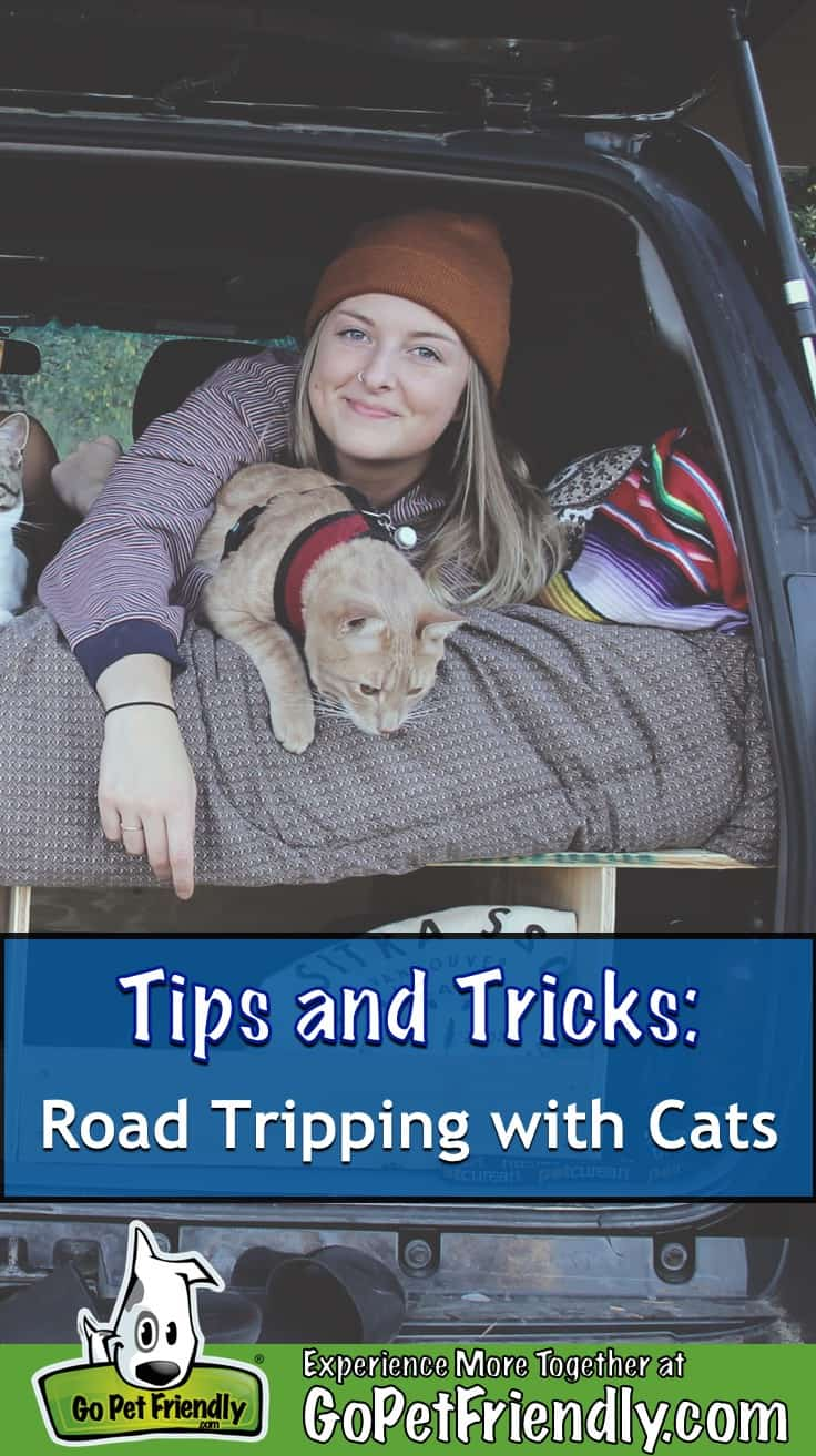 Woman and a cat on a bed in the back of a vehicle