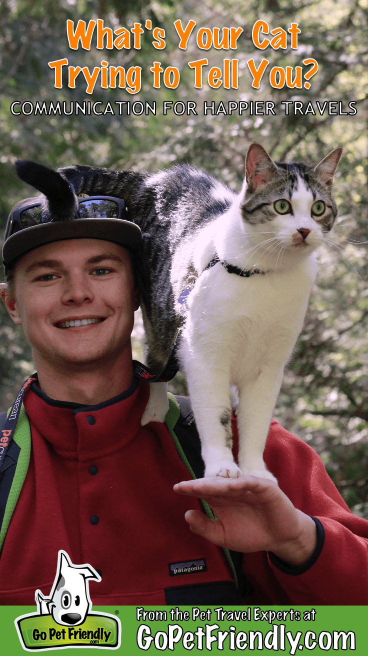 What is Your Cat Telling You? Better Communication for Happier Travels | GoPetFriendly.com
