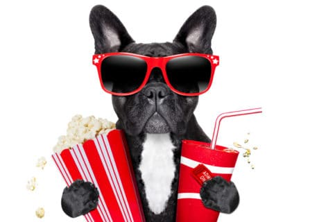 Take Your Dog To The Drive-in: Pet Friendly Movie Theaters Across the U.S. & Canada