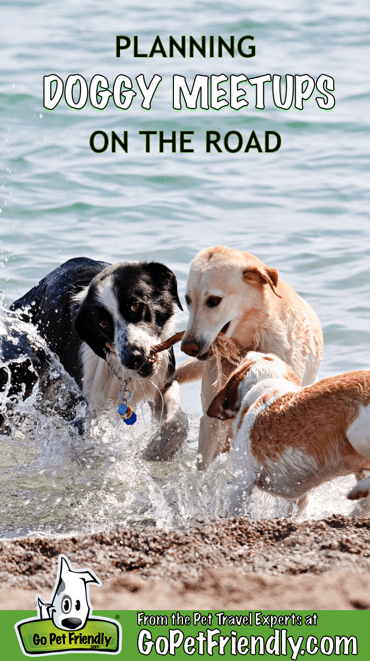 Planning Doggy Meetups On The Road | GoPetFriendly.com