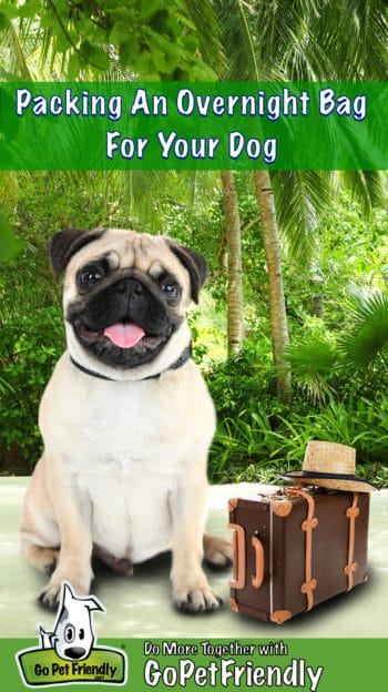Smiling tan pug dog sitting beside a small brown suitcase with palm trees in the background