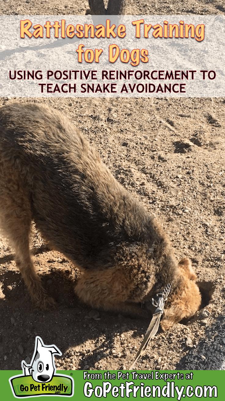 Rattlesnake Training for Dogs: The 411 on Snake Avoidance | GoPetFriendly.com