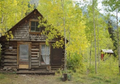 Pet friendly camping cabin in an aspen forest