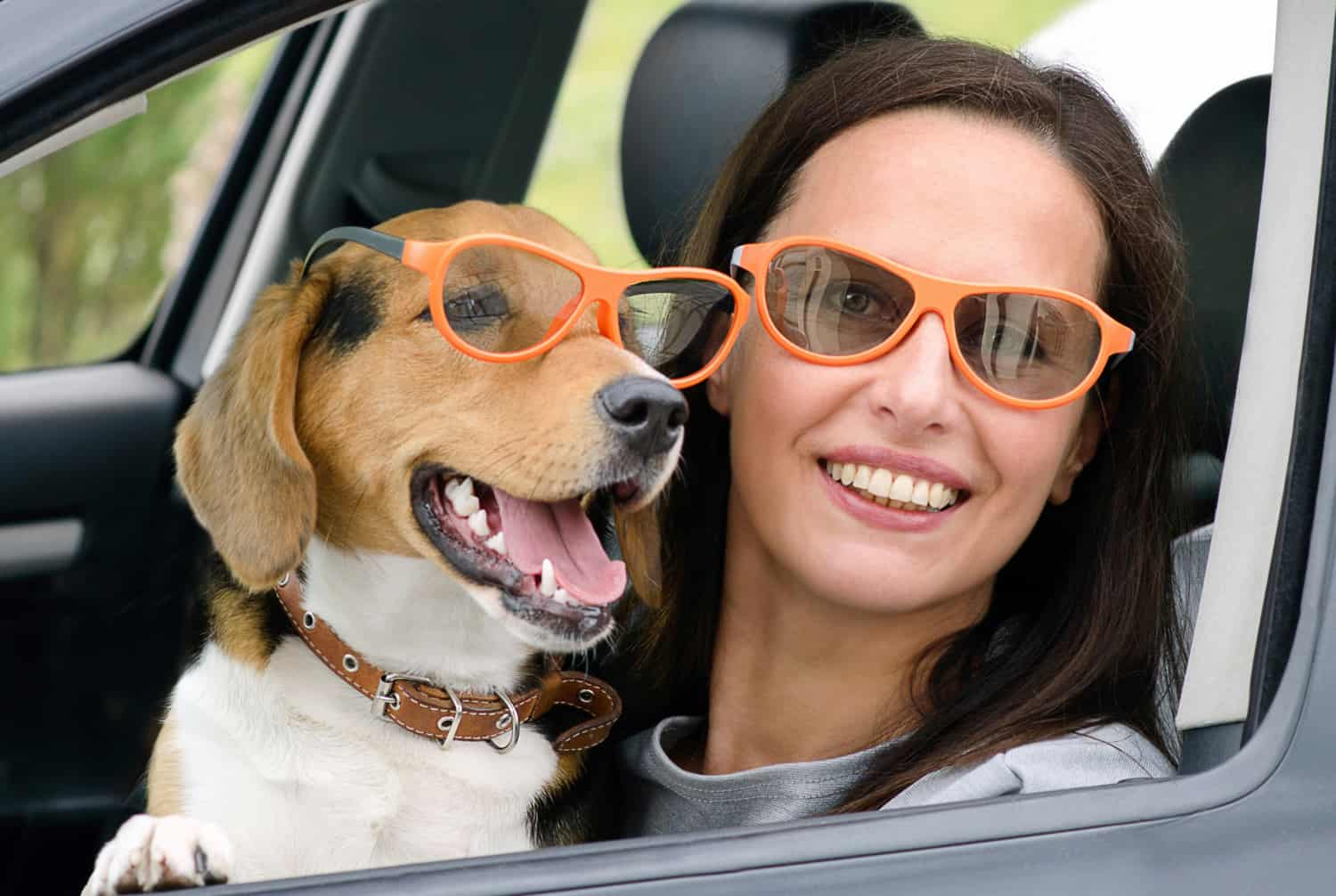 Smiling Woman and beagle dog in car at a pet friendly movie theater wearing matching sunglasses.