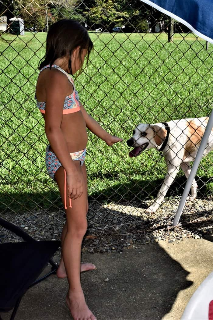 Child greets lost dog at the pool.