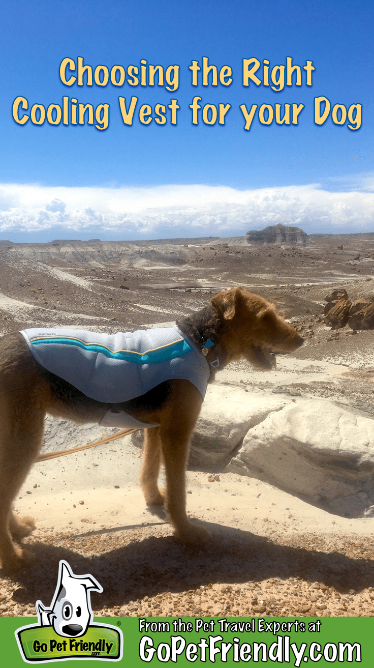 Choosing the Right Cooling Vest for Your Dog | GoPetFriendly.com