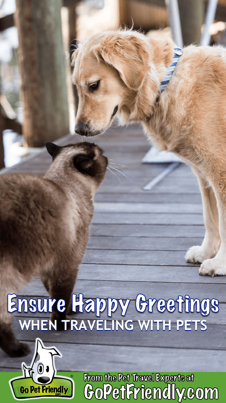 Ensuring Happy Greetings While Traveling With Your Pet | GoPetFriendly.com