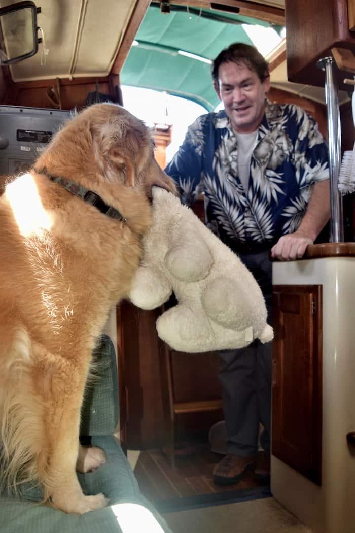 Honey the golden retriever holds a stuffed bear.