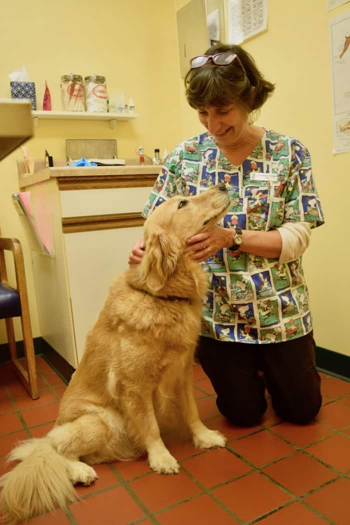 Honey the golden retriever loves her vet Dr Armao.