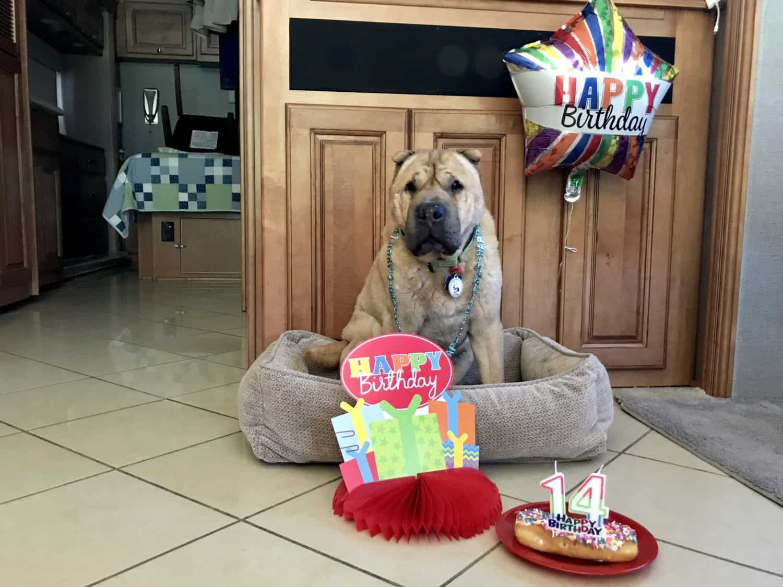 Happy 14th Birthday, Ty | GoPetFriendly.com