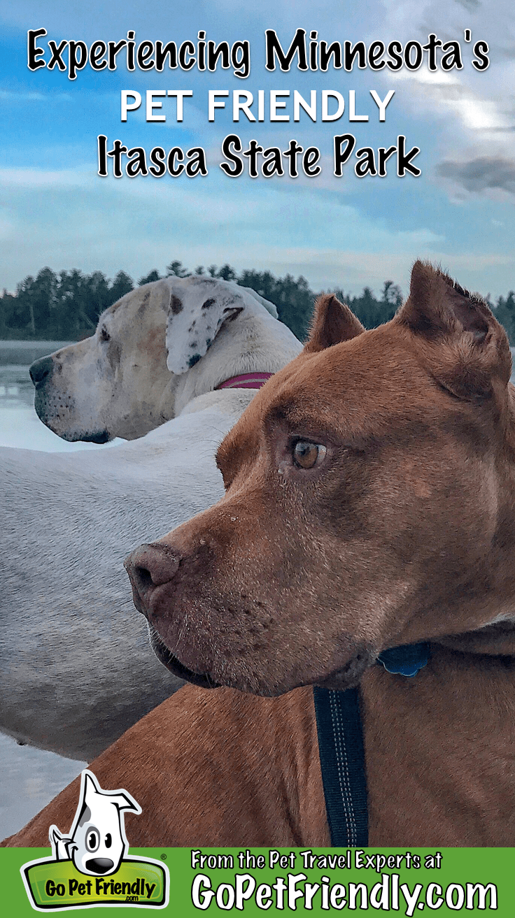 Two dogs overlooking Lake Itasca in pet friendly Itasca State Park in Minnesota