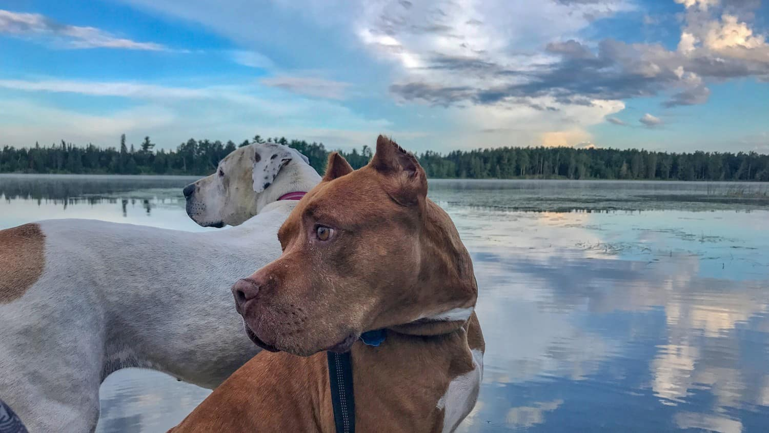 Two dogs admiring the view at pet friendly Itasca State Park in Minnesota
