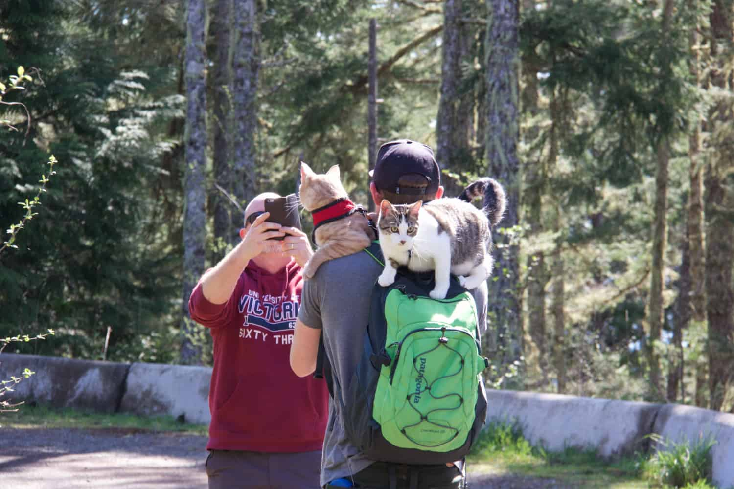 Hiking with Cats