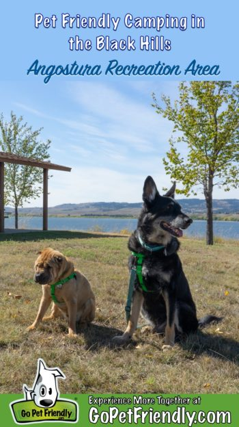 Shar-pei and German Shepherd Dog at a pet friendly campground in the Black Hills of South Dakota