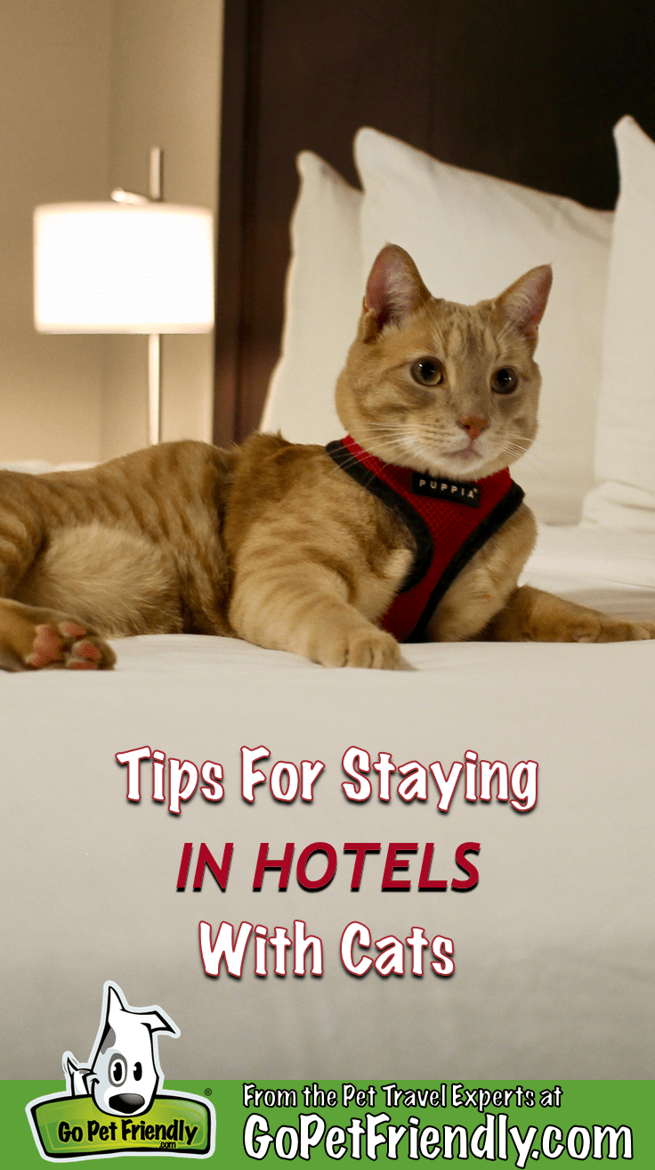 Fish the cat laying on the bed in a hotel room