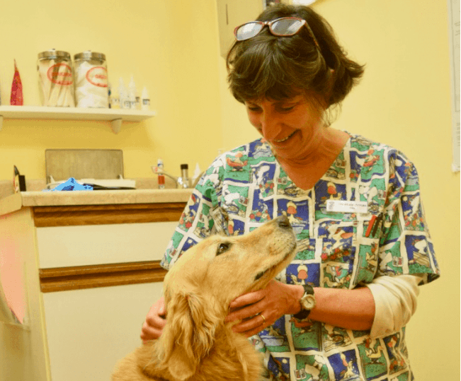 Honey the golden retriever looks lovingly at her veterinarian, Dr Armao.