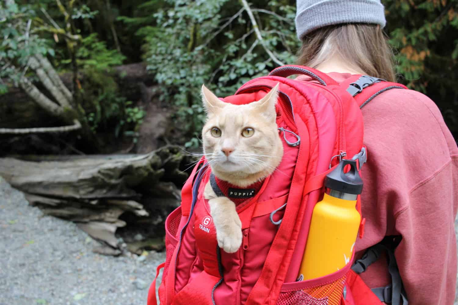 Fish the cat with his head poking out of a backpack