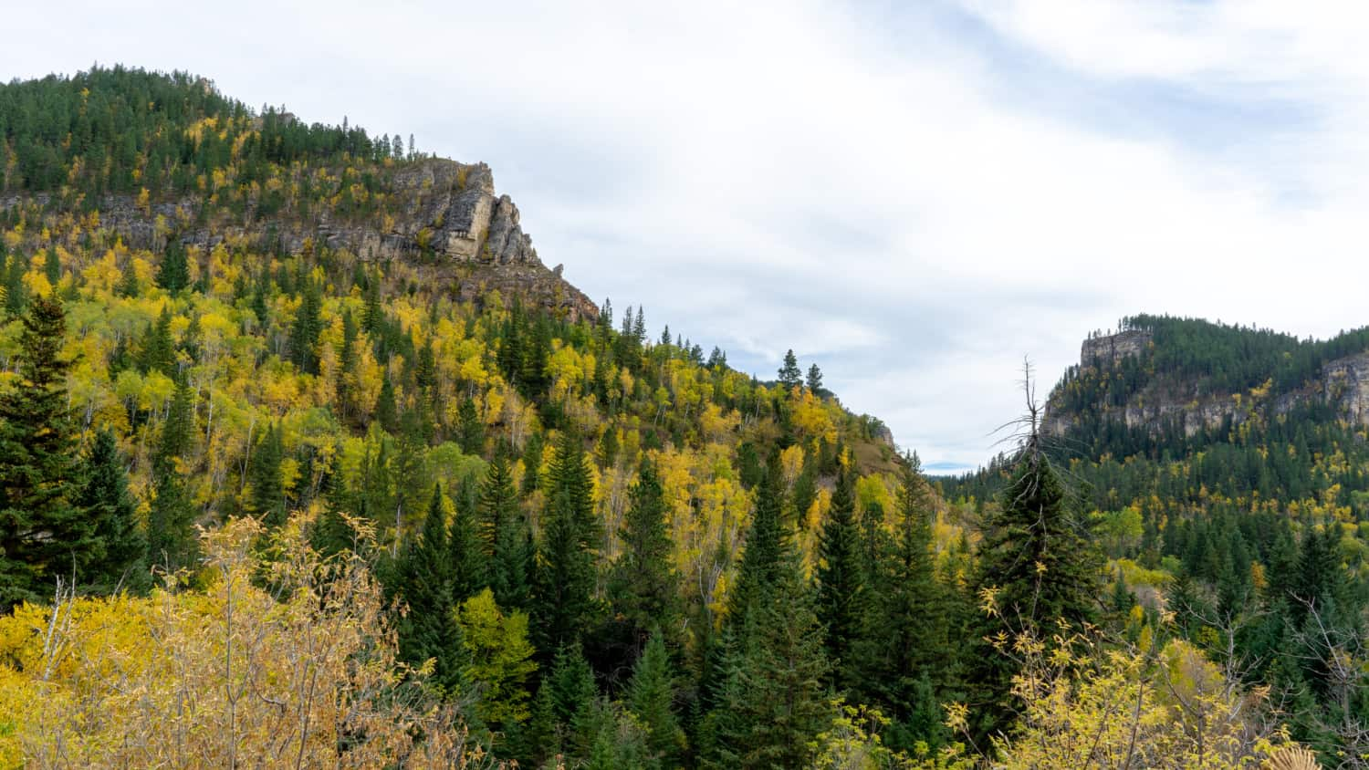 Colorful aspens and pines in Spearfish Canyon, South Dakota