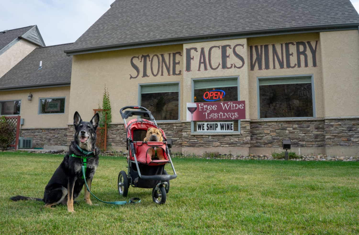 Buster and Ty from GoPetFriendly.com at pet-friendly Stone Faces Winery in Hill City, SD