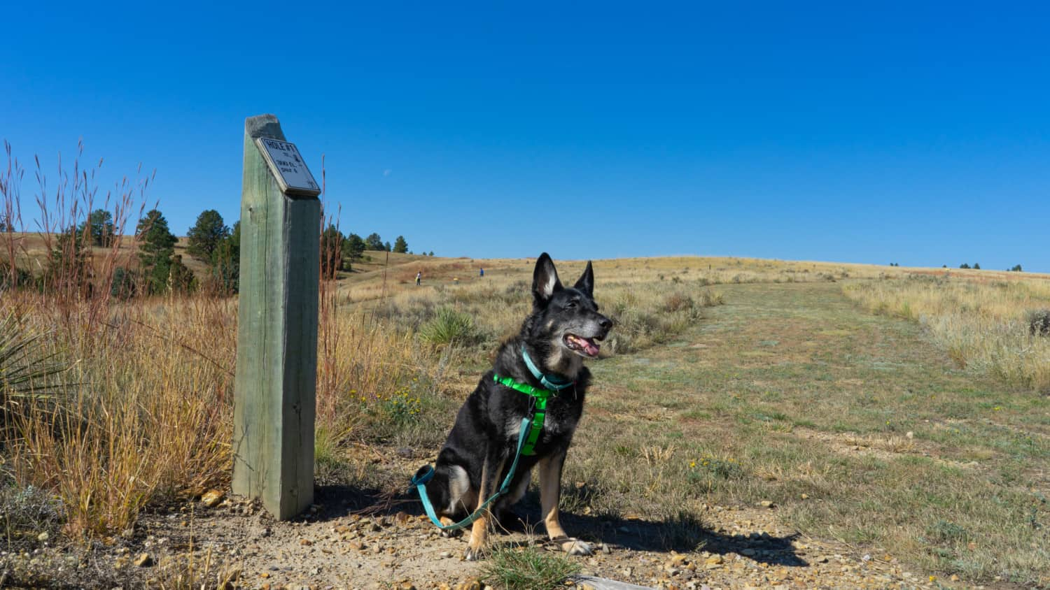 Buster the German Shepherd from GoPetFriendly.com at the pet-friendly disc golf course at Angostura Recreation Area in the Black Hills of South Dakota