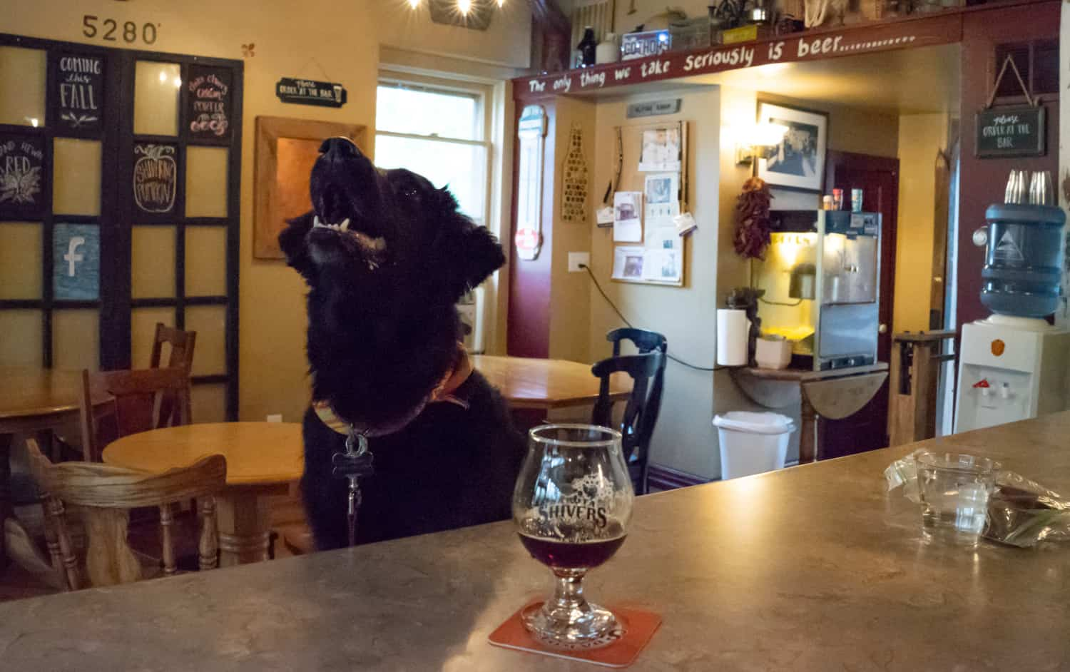 A black dog sits on a bar stool at pet-friendly Dakota Shivers Brewing in Lead, CO