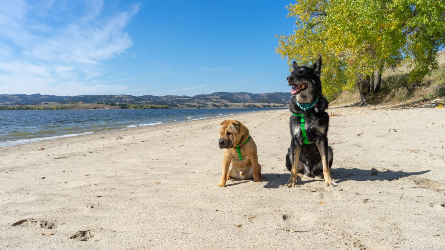Pet Friendly Camping in the Black Hills – Angostura Recreation Area