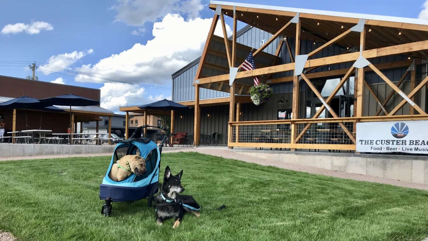 Two dogs on the front lawn at pet friendly Custer Beacon in South Dakota