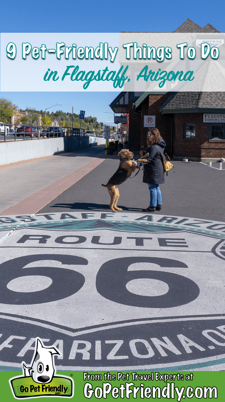 9 Pet Friendly Things to Do in Flagstaff, AZ | GoPetFriendly.com