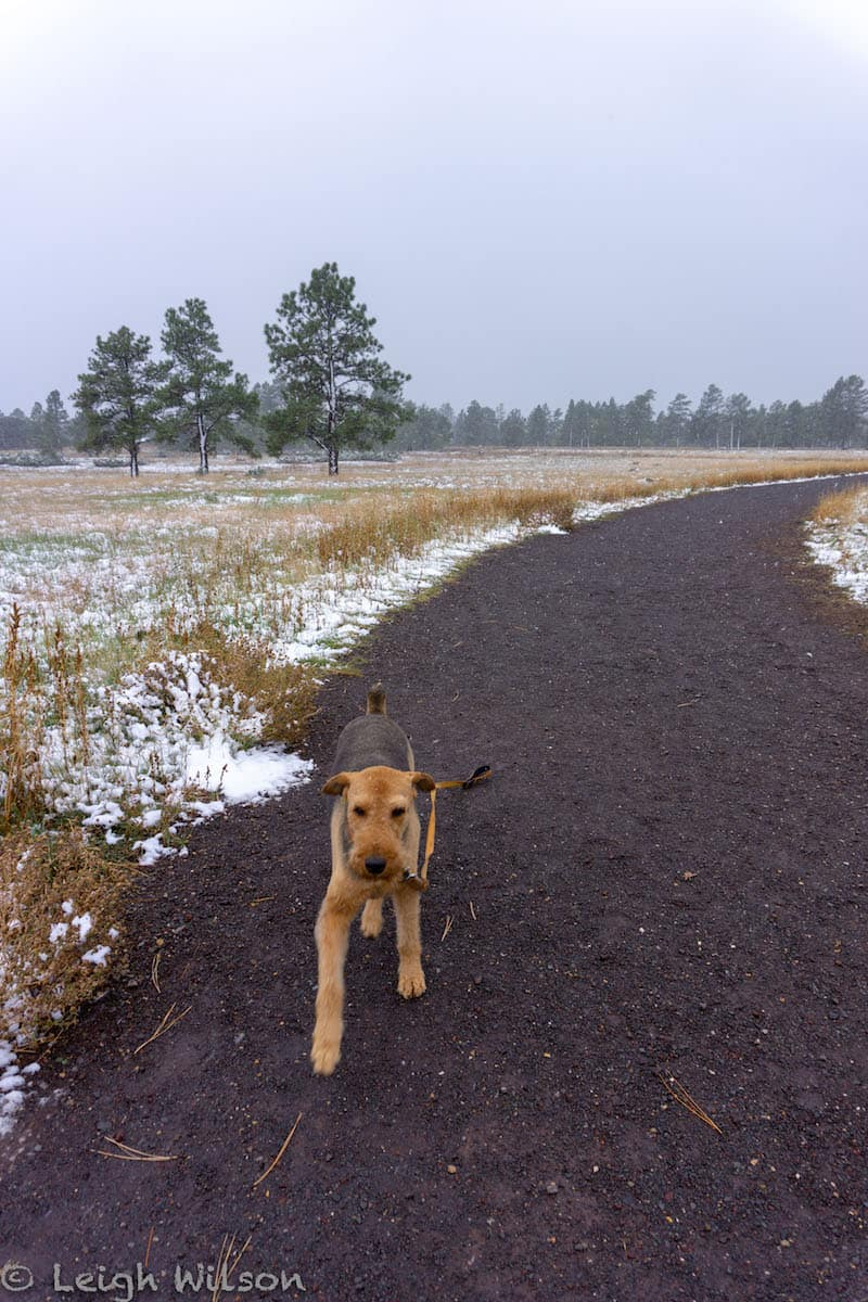 hiking with dogs in Flagstaff