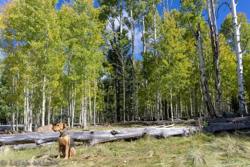 Flagstaff hiking with dog