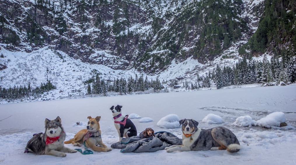 Dogs resting after a pet-friendly hike to Heather Lake near Seattle, WA