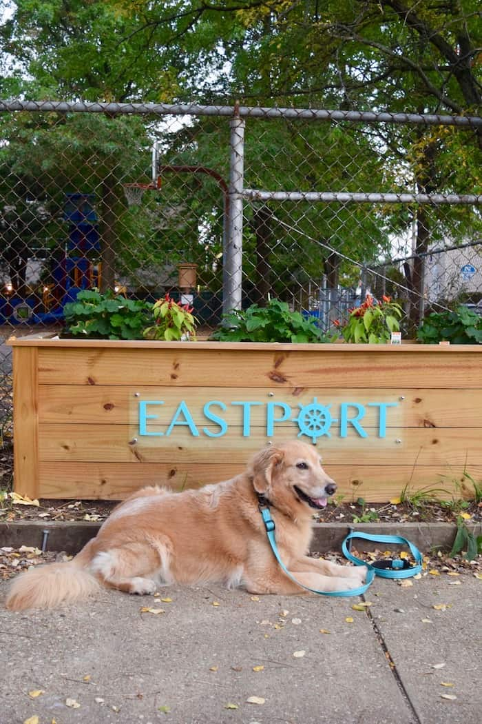 Honey thinks Eastport is a great pet-friendly neighborhood. (golden retriever in front of Eastport sign)