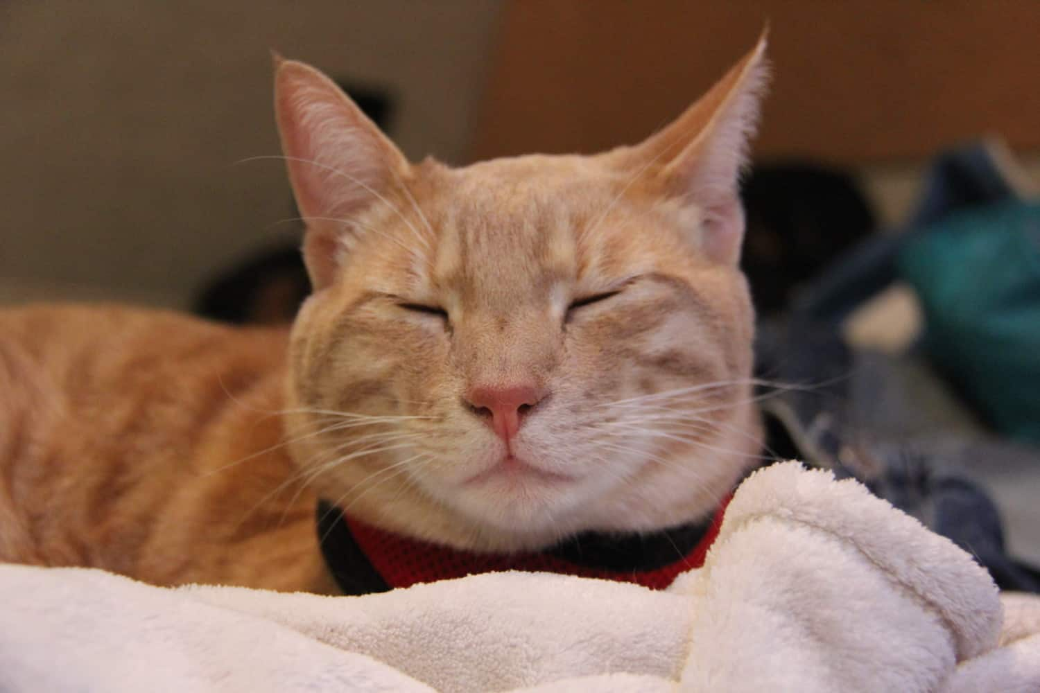 Fish the cat sleeping on a comfortable pet bed