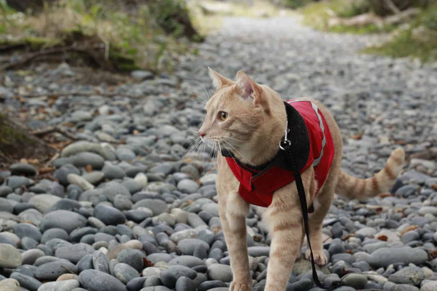 A Gift Guide for Traveling Cats