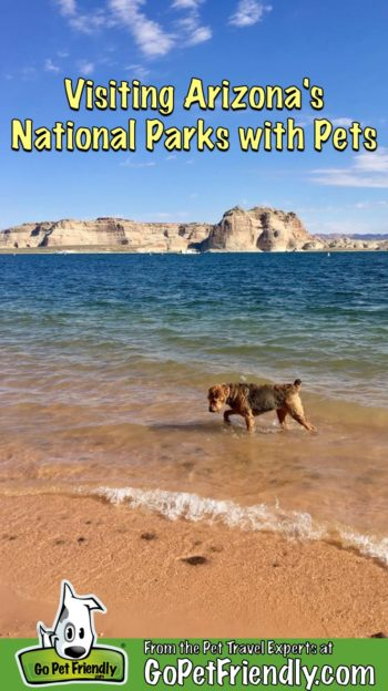 Dog in the water at a pet-friendly beach in Glen Canyon National Recreation Area in Arizona