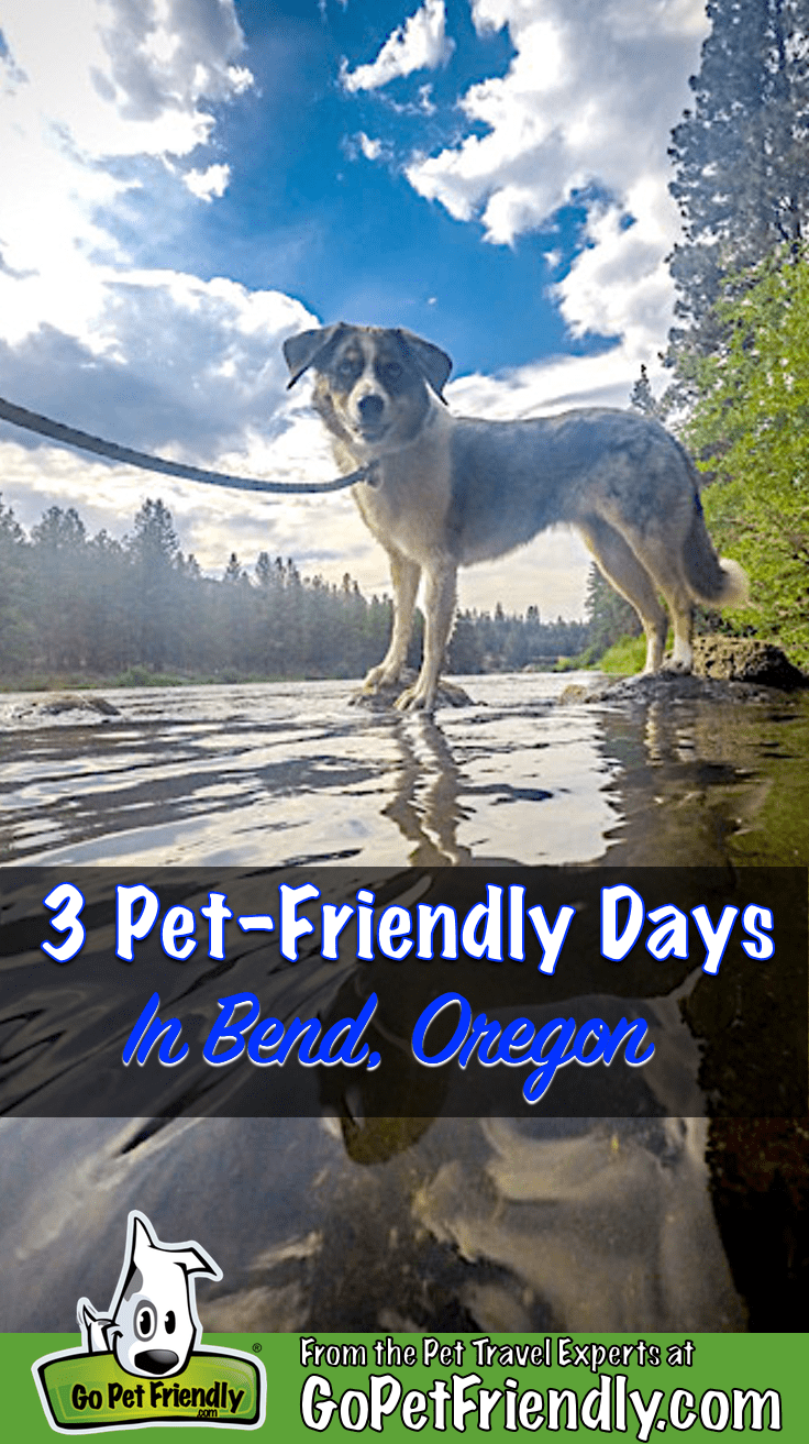 Sora the dog wading in the Deschutes River in pet-friendly Bend, Oregon
