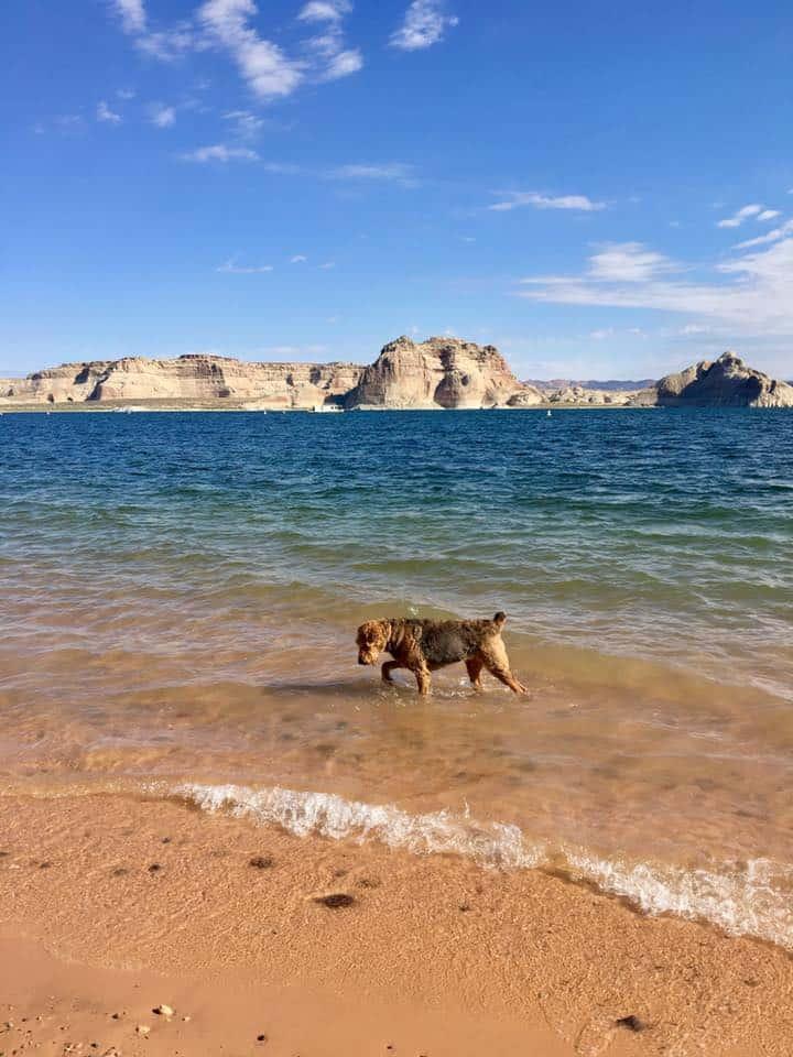Dog Friendly Beach at Glen Canyon National Recreation Area
