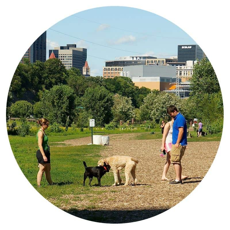 Two dogs playing in High Bridge Dog Park in Minneapolis, MN while a woman and man watch
