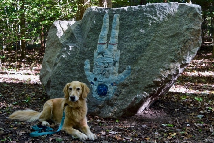 Honey the golden retriever poses near a sculpture at the dog-friendly AnnMarie Sculpture Garden.