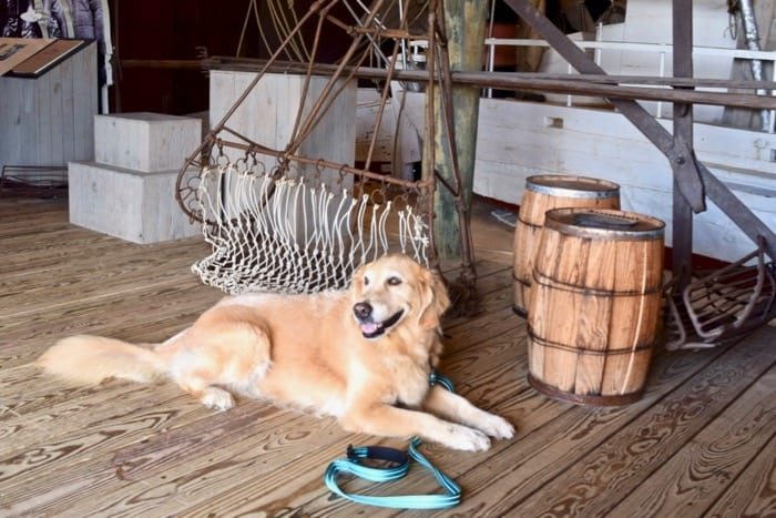 St Michael's Maritime Museum is one of many that are pet-friendly. (golden retriever lying down at maritime exhibit)