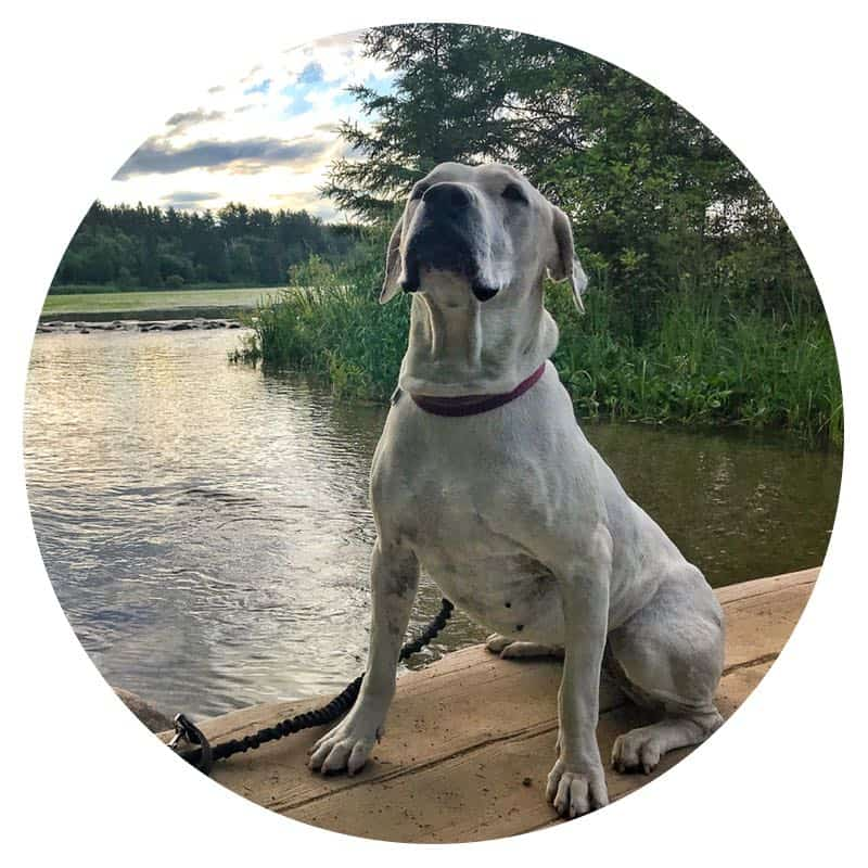 Dog sitting on bridge over the Mississippi River at pet-friendly Itasca State Park in northern Minnesota