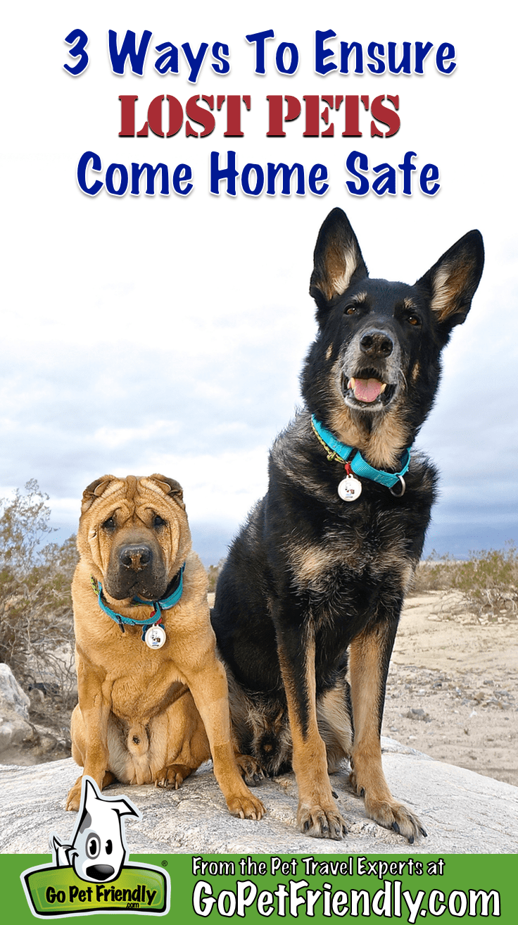 Ty the Shar-pei and Buster the German Shepherd from GoPetFriendly.com sitting on a rock near Palm Springs, CA
