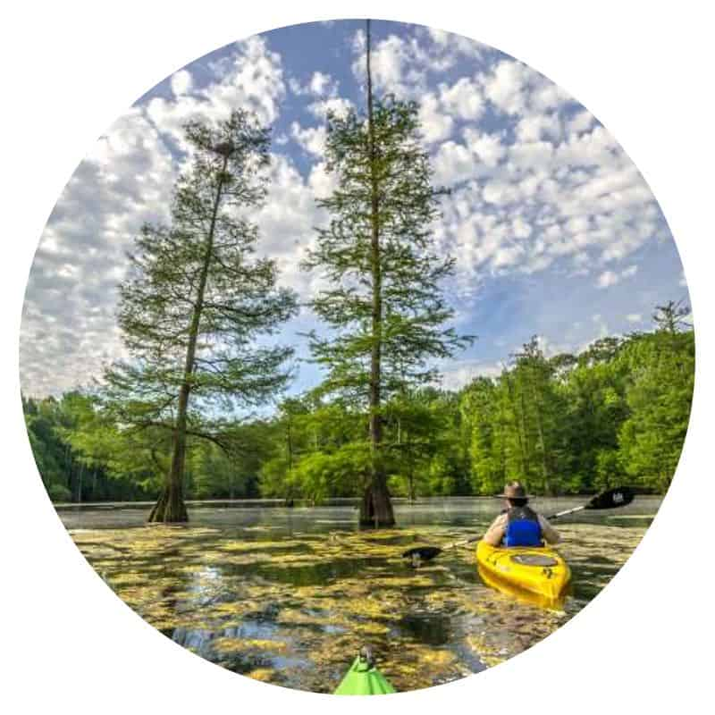 Person kayaking in a cypress swamp in Mississippi River State Park in Arkansas