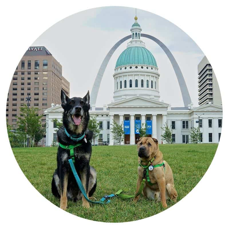 Buster and Ty, the GoPetFriendly.com dogs, at the Gateway Arch in St. Louis, MO