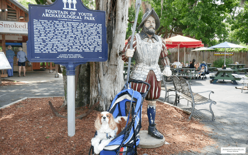 Cocker Spaniel dog, Dexter, posing with a statue at the pet friendly Fountain of Youth Archaeological Park in St. Augustine, Florida