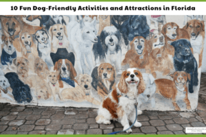 Cocker Spaniel dog, Dexter, in front of a dog mural in pet friendly Florida
