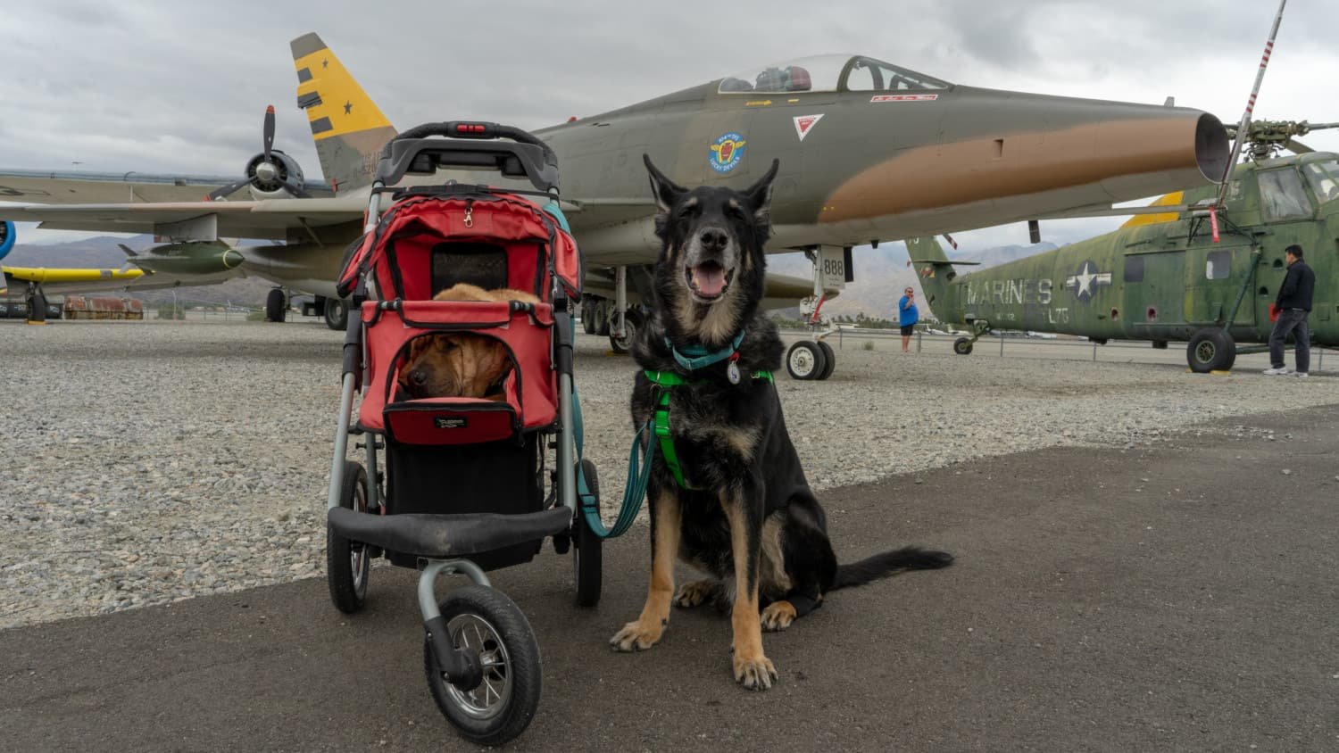 Ty and Buster, the GoPetFriendly.com dogs, in front of a plane at the pet friendly Palm Springs Air Museum in Palm Springs, CA