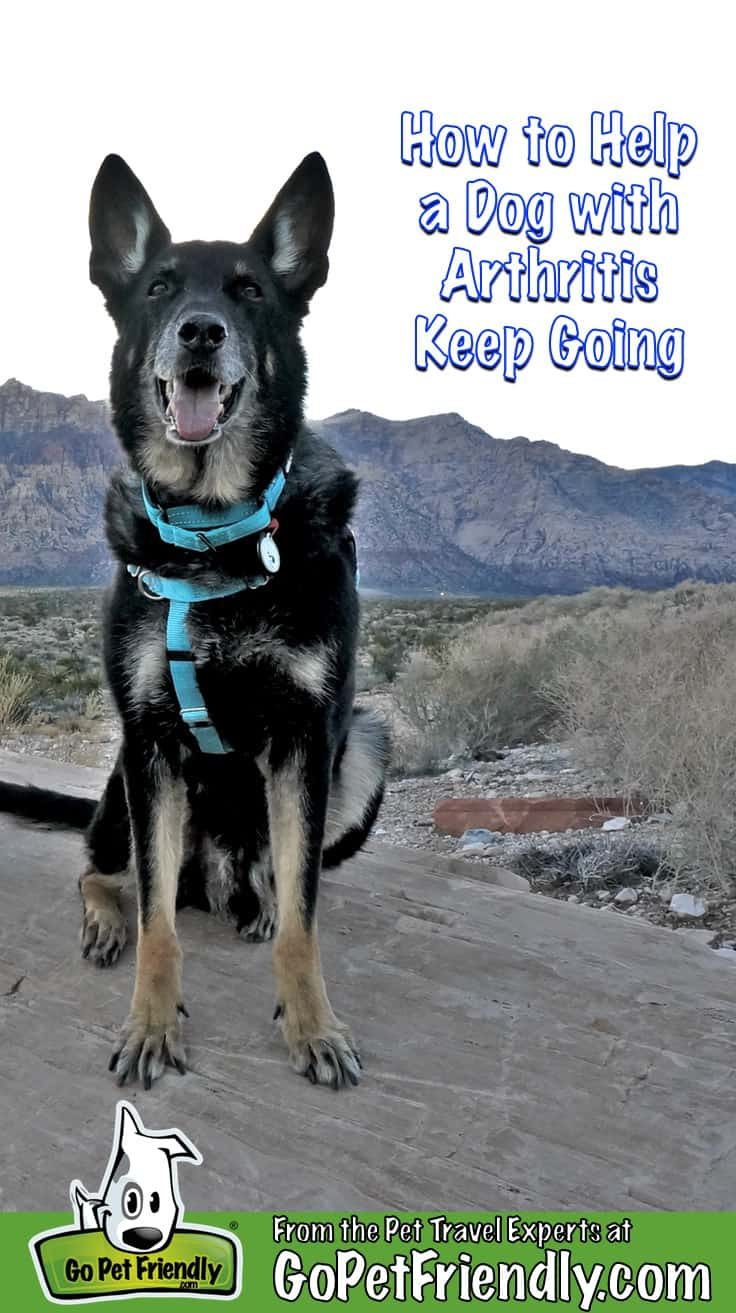 Buster the dog with arthritis keeps traveling at pet friendly Red Rock Canyon, NV