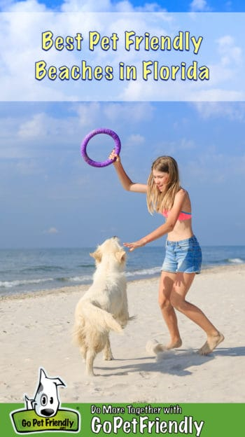 Girl and Golden Retriever Dog playing frisbee on a pet friendly beach in Florida